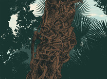 Twisted Wild Lianas And Silhouettes Of Tropical Palm Trees. Vector Illustration