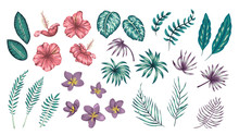 Vector Set Of Tropical Flowers...