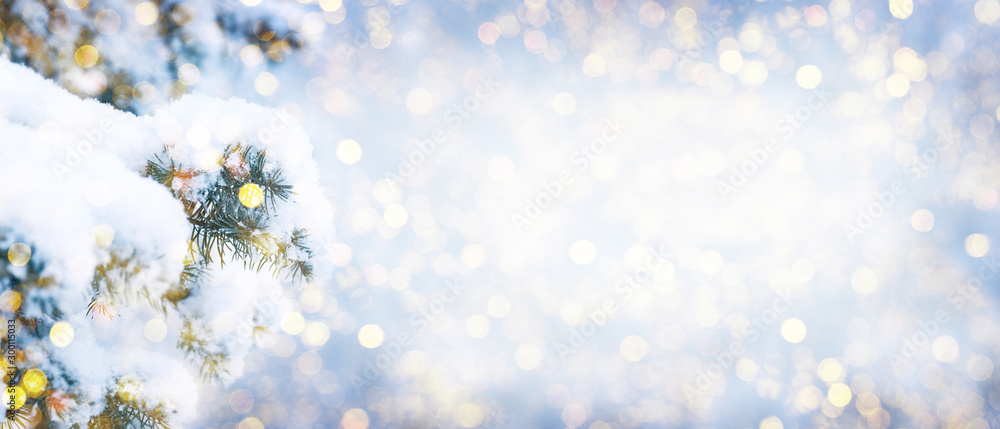Fototapety, obrazy: Winter fir tree christmas scene with sunlight.