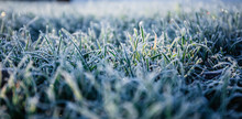 Morning Dew Froze On A Green G...