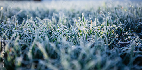 Morning dew froze on a green grass lawn and turned it into a white blanket Wallpaper Mural