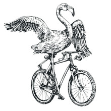 Flamingo On A Bicycle Engraving Style Vector