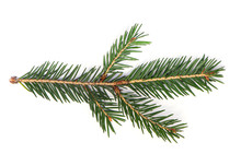 Fir Tree Branch, Pine Tree Bra...