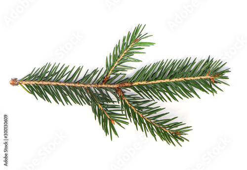 Fotografia  Fir Tree Branch, Pine Tree Branch isolated on white Background