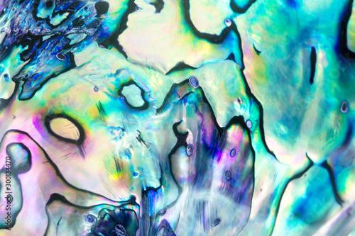 Photo Close up multicolour texture background of paua shell, haliotis iris or Abalone