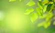 Closeup nature green for background/texture leaf blurred and greenery natural plants branch in garden at summer under sunlight concept design wallpaper view with copy space add text.