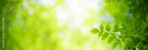Obraz Beautiful nature view of green leaf on blurred greenery background under sunlight with bokeh and copy space using as background natural plants landscape, ecology cover page concept. - fototapety do salonu