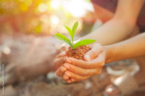 Obraz Young Woman holding green seedling on husk on her hand prepare for plant, side view with selective focus. - fototapety do salonu
