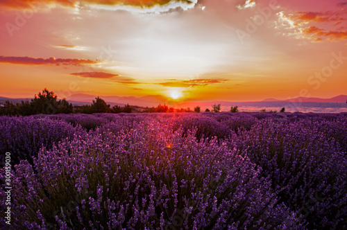 Autocollant pour porte Lavande Lavender fields in sunrise, Isparta Turkey