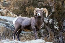 Mammals Of Colorado. Colorado ...