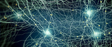 Signal Transmitting Neuron Or ...