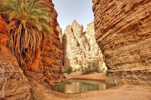 Oaza w wąwozie  zwana guelta na Saharze w Algierii Canvas Print