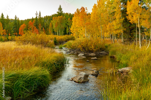 Photo Brilliant Colors of Aspen Along Duck Creek