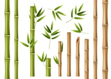 Realistic Bamboo. Green And Brown Bamboo Stems With Leaves, Asian Forest 3d Vector Isolated China And Japan Decoration Elements