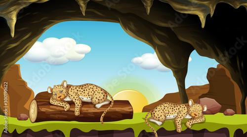 Poster de jardin Jeunes enfants Scene with two cheetahs sleeping in cave