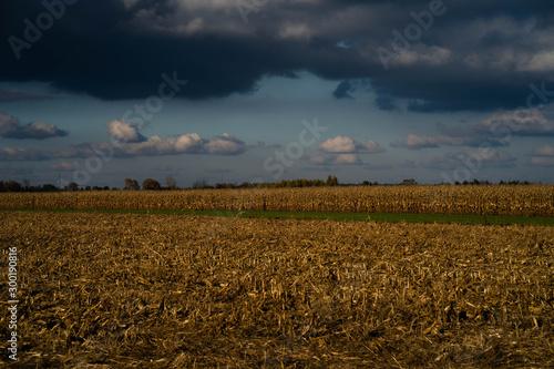 Fototapeta pole kukurydzy obraz