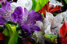 Bright Alstroemeria Flower On ...
