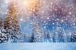 Leinwanddruck Bild - Majestic winter landscape with snowy fir trees.  Winter postcard.