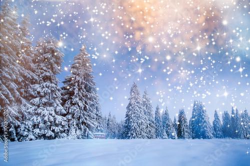 Obraz Majestic winter landscape with snowy fir trees.  Winter postcard. - fototapety do salonu