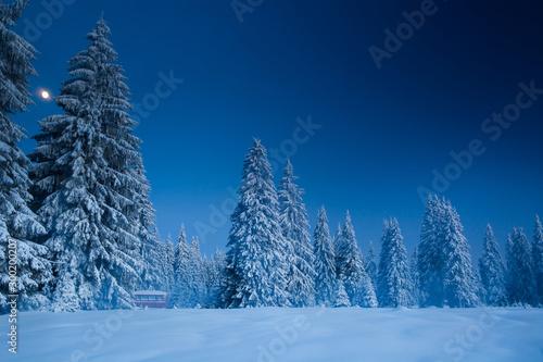 Foto auf Gartenposter Blaue Nacht Majestic winter landscape with snowy fir trees. Winter postcard.