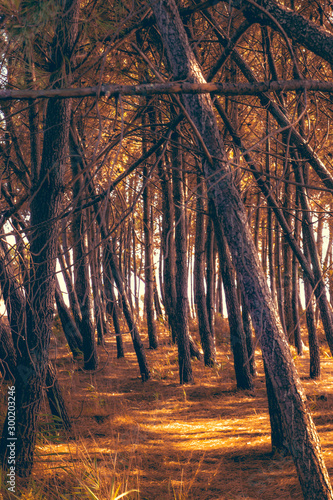 Pattern of lot of tree in autumn season - 300203246