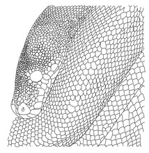 Detailed Drawing Of A Snake. Sketch. Black Graphic Detailed Drawing Creative Snake On White Background