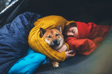 Girl Hug Resting Dog Together In Relax Campsite, Portrait Red Shiba Inu Sleeping In Camp Tent , Hiker Woman Leisure With Puppy Dog Holiday Nature Vacation, Friendship Love Concept