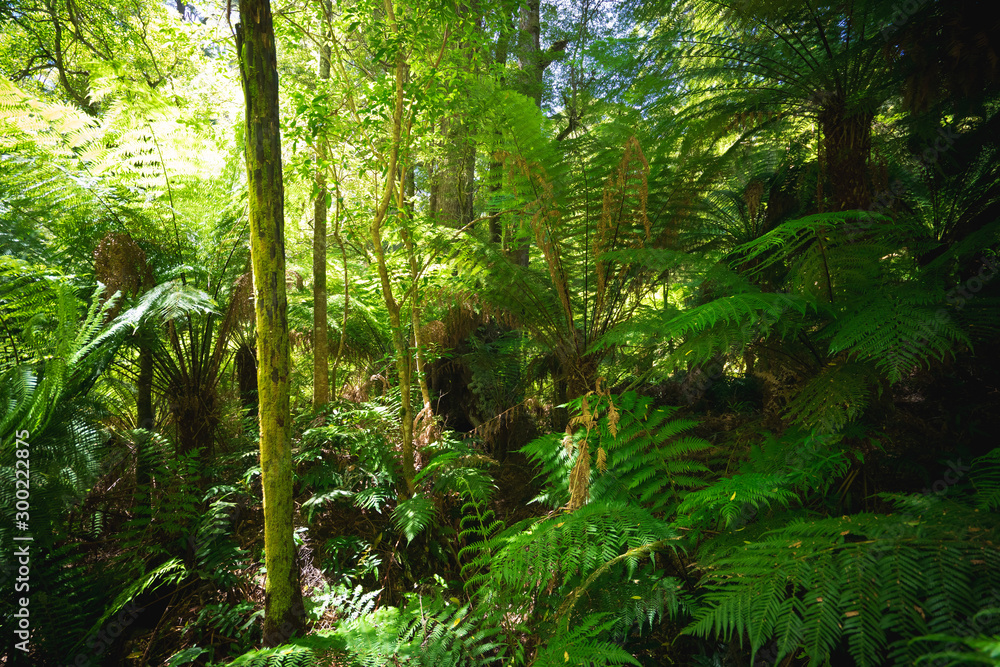 Australia green rain forest jungle