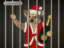 The Dog In A Santa Claus Outfit With A Bottle Of Champagne Is Behind Bars In The Prison.