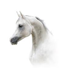 Beautiful arabian stallion
