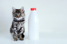 Portrait Little Gray Kitten Is Sitting Next To A Plastic Bottle Of Milk. White Background. Look At The Camera.