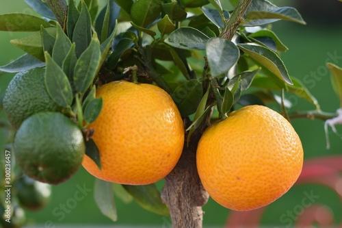 orange Tapéta, Fotótapéta