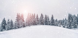 Fototapeta  - Beautiful sunset at winter mountains landscape. Vivid white spruces on a snowy day.  Alpine ski resort. Winter greeting card. Happy New Year
