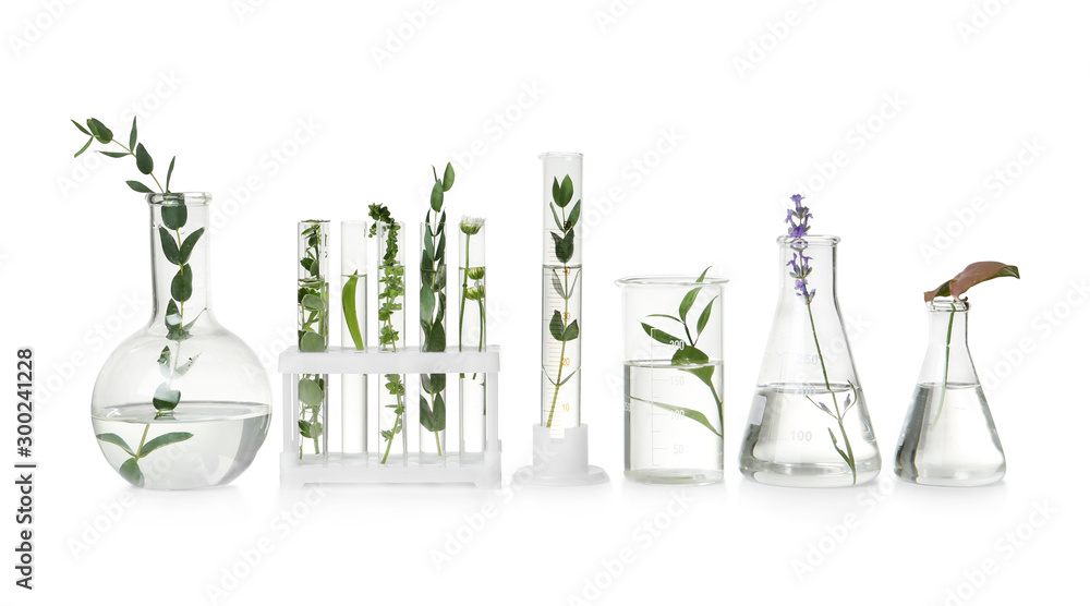 Fototapeta Test tubes and other laboratory glassware with different plants on white background