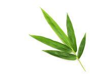 Fresh Bamboo Leaves Isolated O...