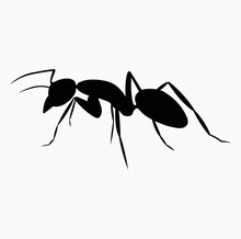 Ant Icon Vector Black Realisti...