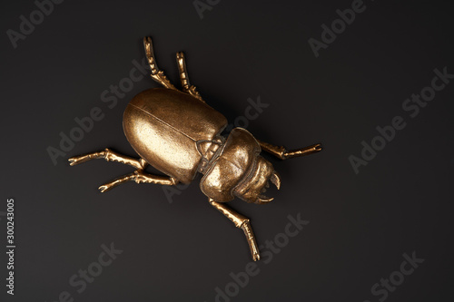 Golden scarab beetle on black background with copy space Fototapeta