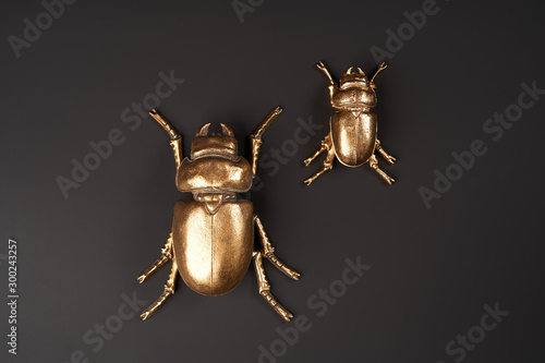 Pinturas sobre lienzo  Golden scarab beetle on black background with copy space
