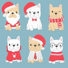 Cute French Bulldog Puppy In C...