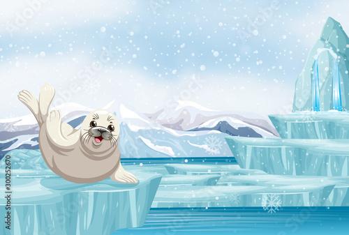 Spoed Foto op Canvas Kids Scene with seal on ice