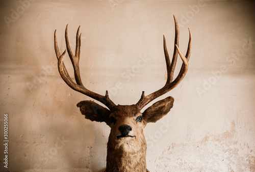 Taxidermy Stuffed deer head on old grungy wall dark tone image huanted concept Wallpaper Mural