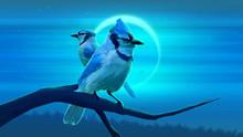 Blue Jay Eclipsse Photo Backgr...