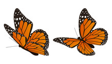The Monarch Butterfly Vector I...
