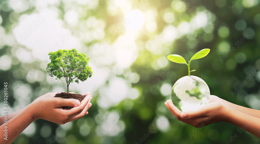Fototapety, obrazy: eco concept. hand holding crystal glass with tree growing and green nature background. idea save world. earth day