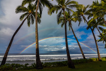 Double Rainbow And Palm Trees