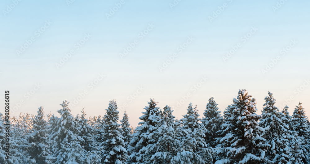 Fototapety, obrazy: Russian winter forest and sky beautiful landscape