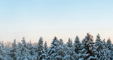 Russian Winter Forest And Sky Beautiful Landscape