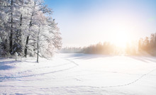 Beautiful Winter Park And Sun