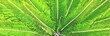 canvas print picture - Close up of green palm leaves in sunlight