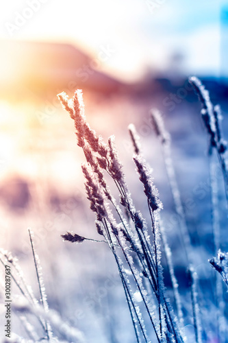 Winter landscape grass in frost on a snowy field at sunrise. Fotobehang